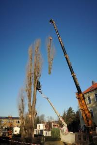 Baumfaellarbeiten_Friedhof